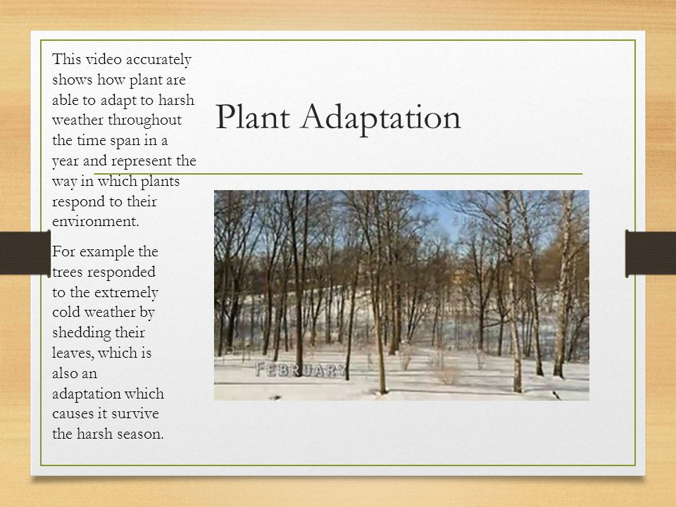 Plant Adaptation This video accurately shows how plant are able to adapt to harsh weather throughout the time span in a year and represent the way in