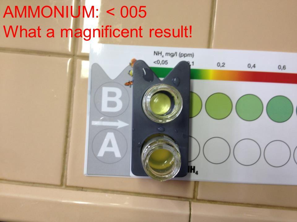 AMMONIUM: < 005 What a magnificent result!
