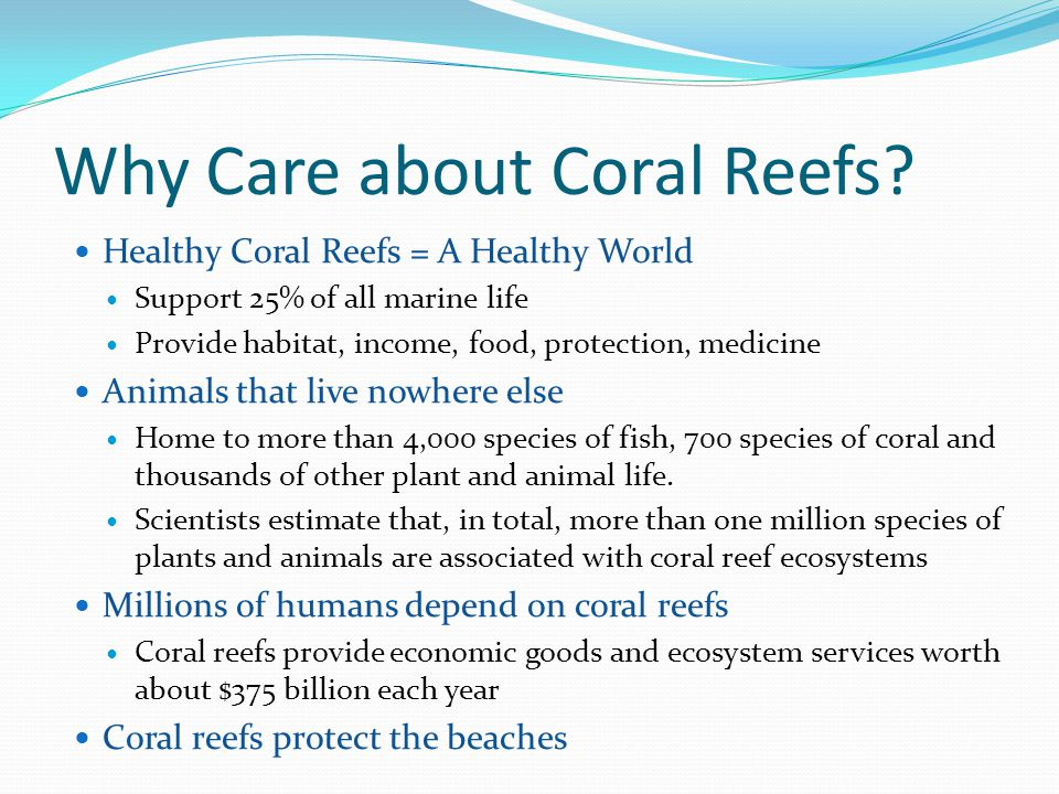 Why Care about Coral Reefs? Healthy Coral Reefs = A Healthy World Support 25% of all marine life Provide habitat, income, food, protection, medicine A
