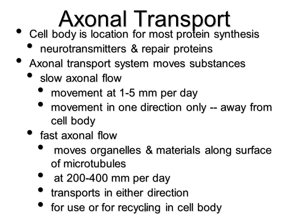 10 Axonal Transport Cell body is location for most protein synthesis Cell body is location for most protein synthesis neurotransmitters & repair prote
