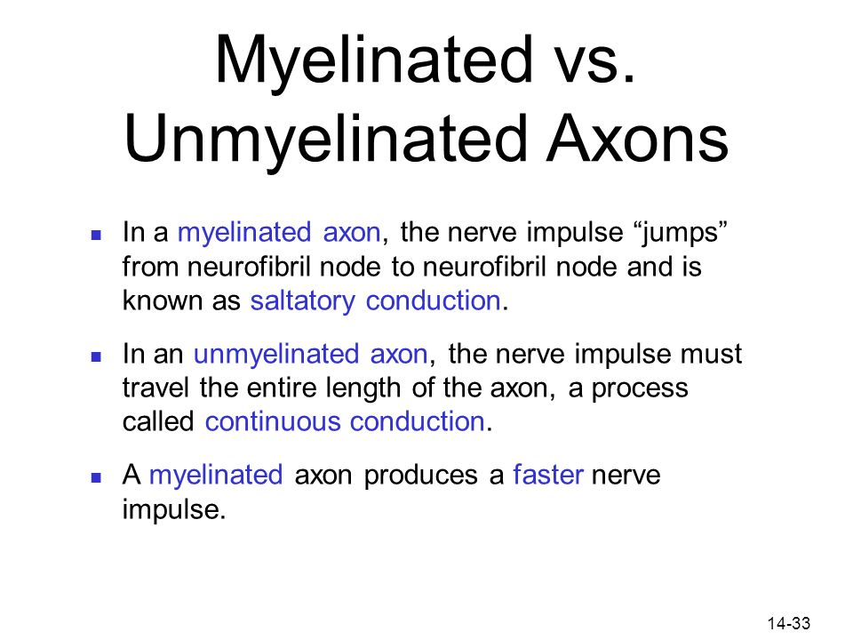 """14-33 Myelinated vs. Unmyelinated Axons In a myelinated axon, the nerve impulse """"jumps"""" from neurofibril node to neurofibril node and is known as salt"""
