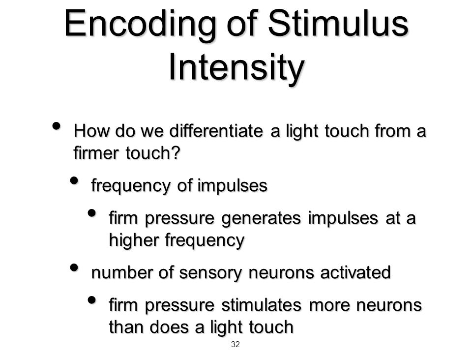 32 Encoding of Stimulus Intensity How do we differentiate a light touch from a firmer touch? How do we differentiate a light touch from a firmer touch