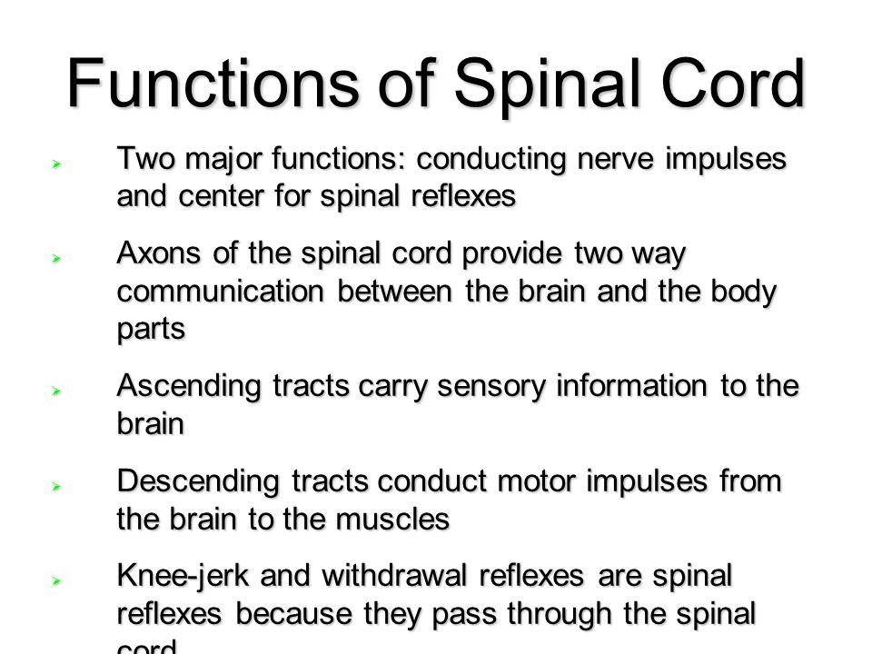 Functions of Spinal Cord  Two major functions: conducting nerve impulses and center for spinal reflexes  Axons of the spinal cord provide two way co