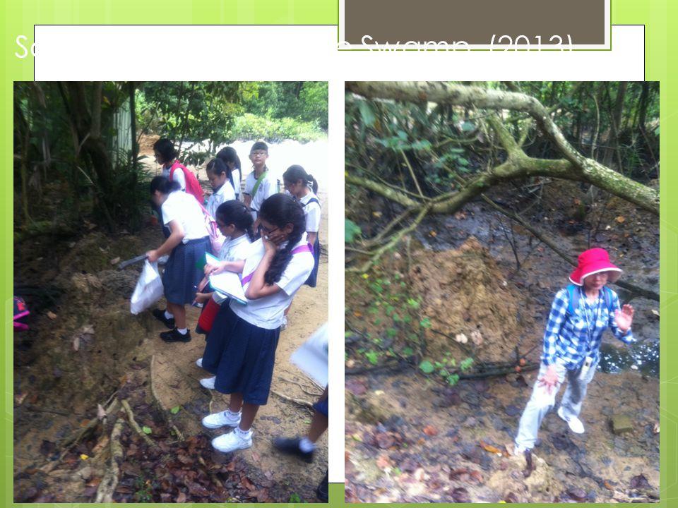 Sc lesson on Mangrove Swamp (2013)