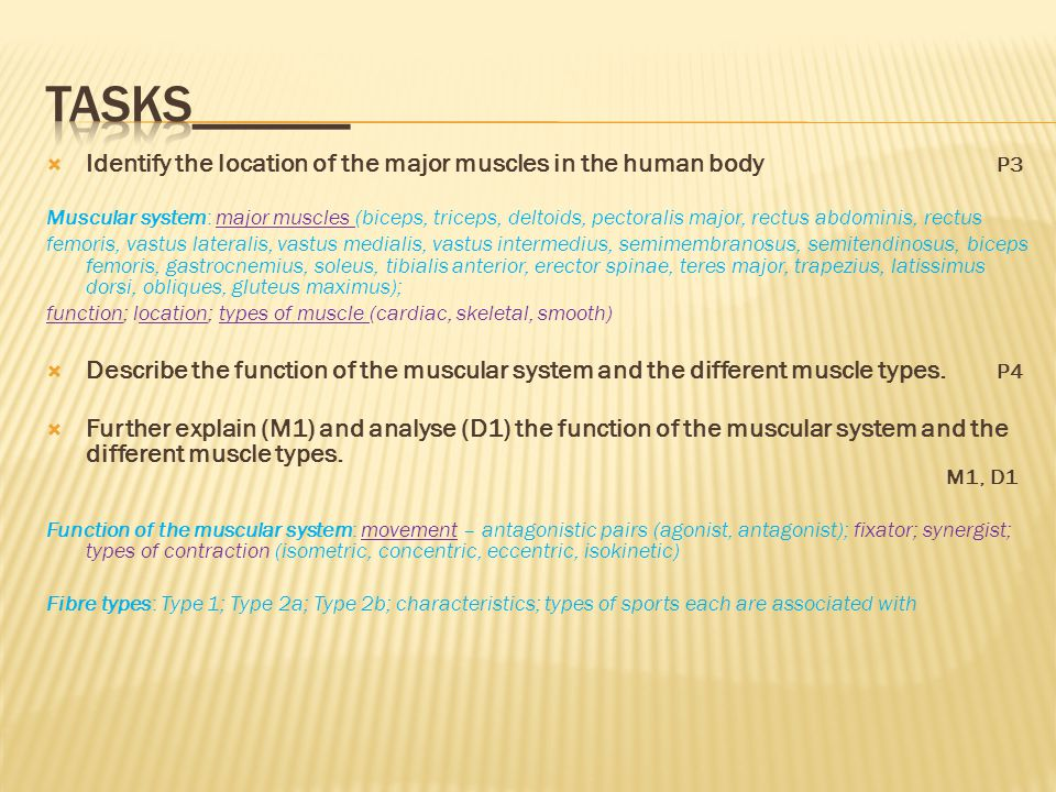 To gain P3 you must IDENTIFY the major muscles in the body.