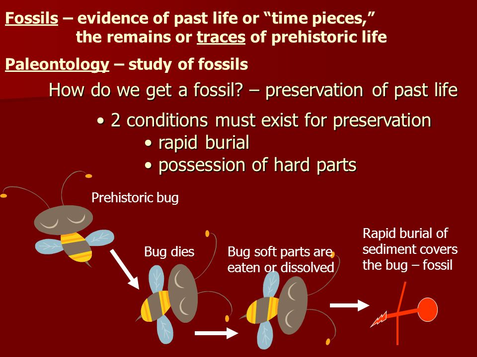 Fossils – evidence of past life or time pieces, the remains or traces of prehistoric life Paleontology – study of fossils How do we get a fossil.