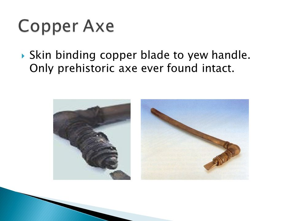  Skin binding copper blade to yew handle. Only prehistoric axe ever found intact.
