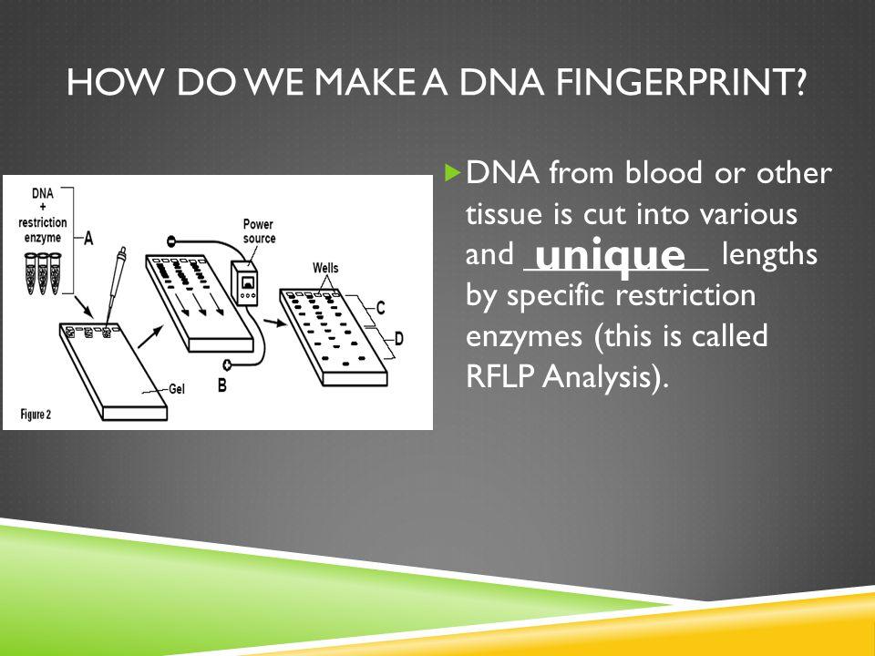 HOW DO WE MAKE A DNA FINGERPRINT.