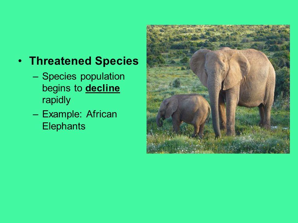 Threatened Species –Species population begins to decline rapidly –Example: African Elephants