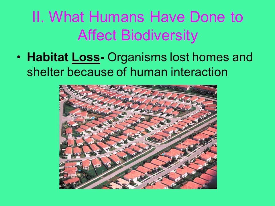 II. What Humans Have Done to Affect Biodiversity Habitat Loss- Organisms lost homes and shelter because of human interaction