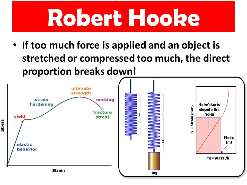 Robert Hooke 10 If too much force is applied and an object is stretched or compressed too much, the direct proportion breaks down!