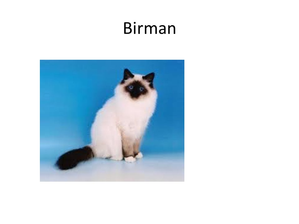 Birman