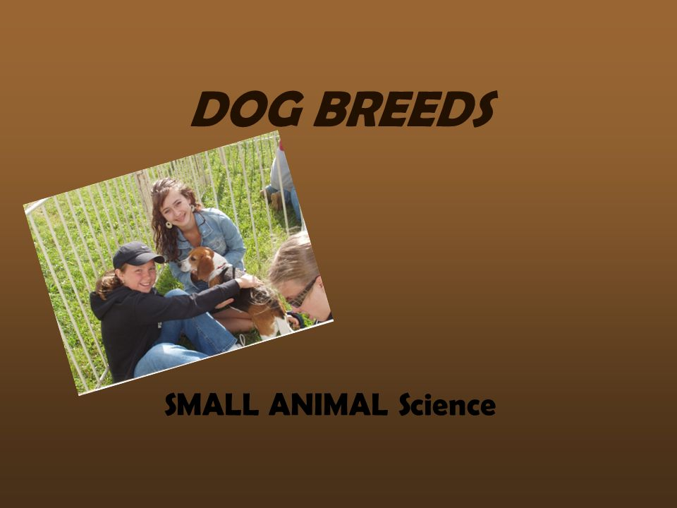 DOG BREEDS SMALL ANIMAL Science
