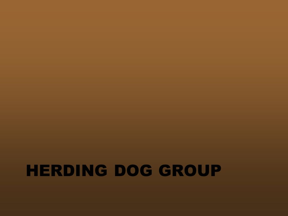 HERDING DOG GROUP