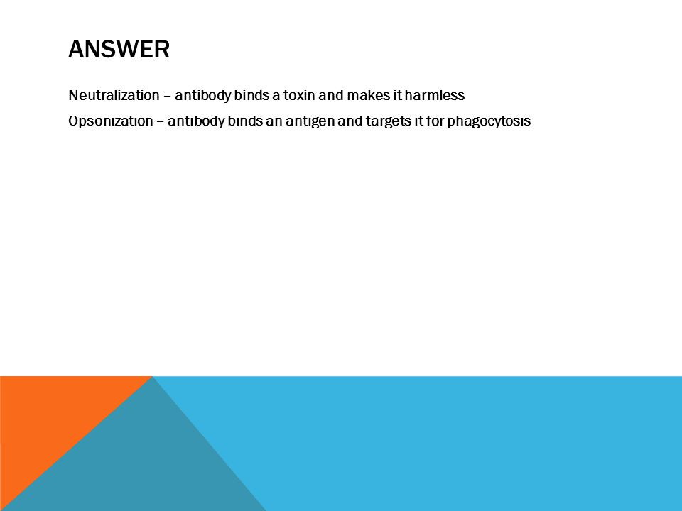 ANSWER Neutralization – antibody binds a toxin and makes it harmless Opsonization – antibody binds an antigen and targets it for phagocytosis
