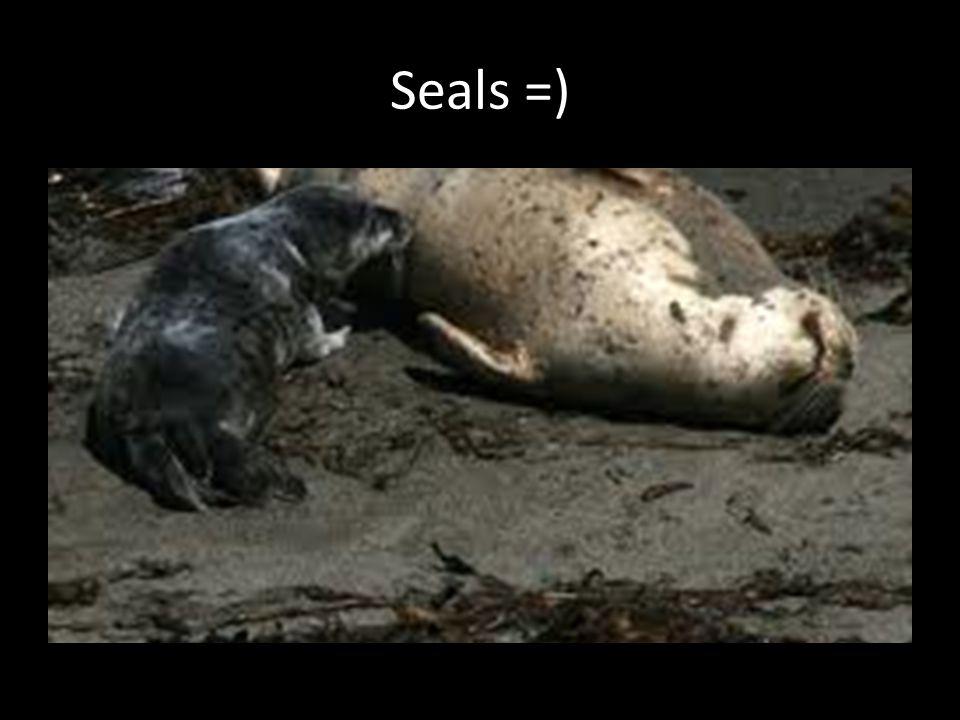 Seals =)