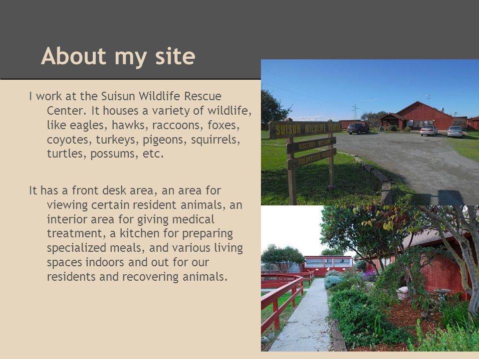 About my site I work at the Suisun Wildlife Rescue Center. It houses a variety of wildlife, like eagles, hawks, raccoons, foxes, coyotes, turkeys, pig