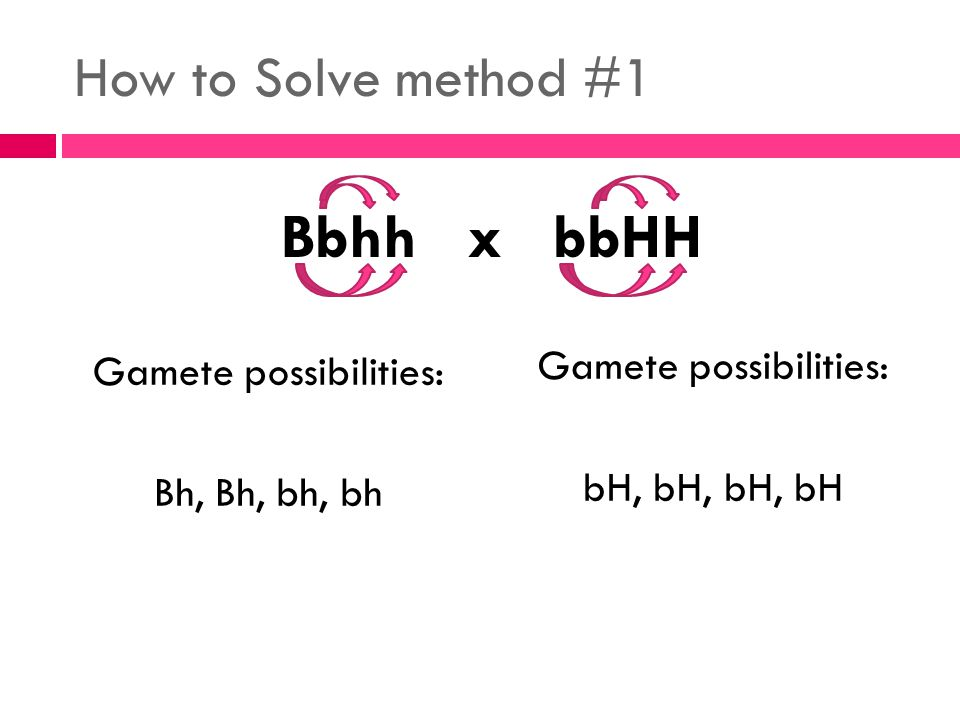 How to Solve method #1 Gamete possibilities: Bh, Bh, bh, bh Gamete possibilities: bH, bH, bH, bH Bbhh x bbHH