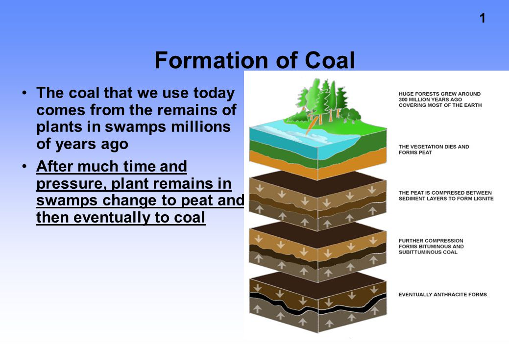 1 Formation of Coal The coal that we use today comes from the remains of plants in swamps millions of years ago After much time and pressure, plant remains in swamps change to peat and then eventually to coal