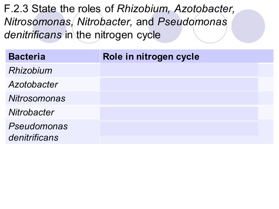 F.2.3 State the roles of Rhizobium, Azotobacter, Nitrosomonas, Nitrobacter, and Pseudomonas denitrificans in the nitrogen cycle BacteriaRole in nitrogen cycle RhizobiumNitrogen fixation (root nodules) AzotobacterNitrogen fixation (soil) NitrosomonasNitrification (NH 3  NO 2 - ) NitrobacterNitrification (NO 2 -  NO 3 - ) Pseudomonas denitrificans Denitrification (NO 2 - and NO 3 -  N 2 )
