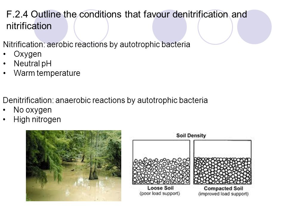 F.2.4 Outline the conditions that favour denitrification and nitrification Nitrification: aerobic reactions by autotrophic bacteria Oxygen Neutral pH Warm temperature Denitrification: anaerobic reactions by autotrophic bacteria No oxygen High nitrogen