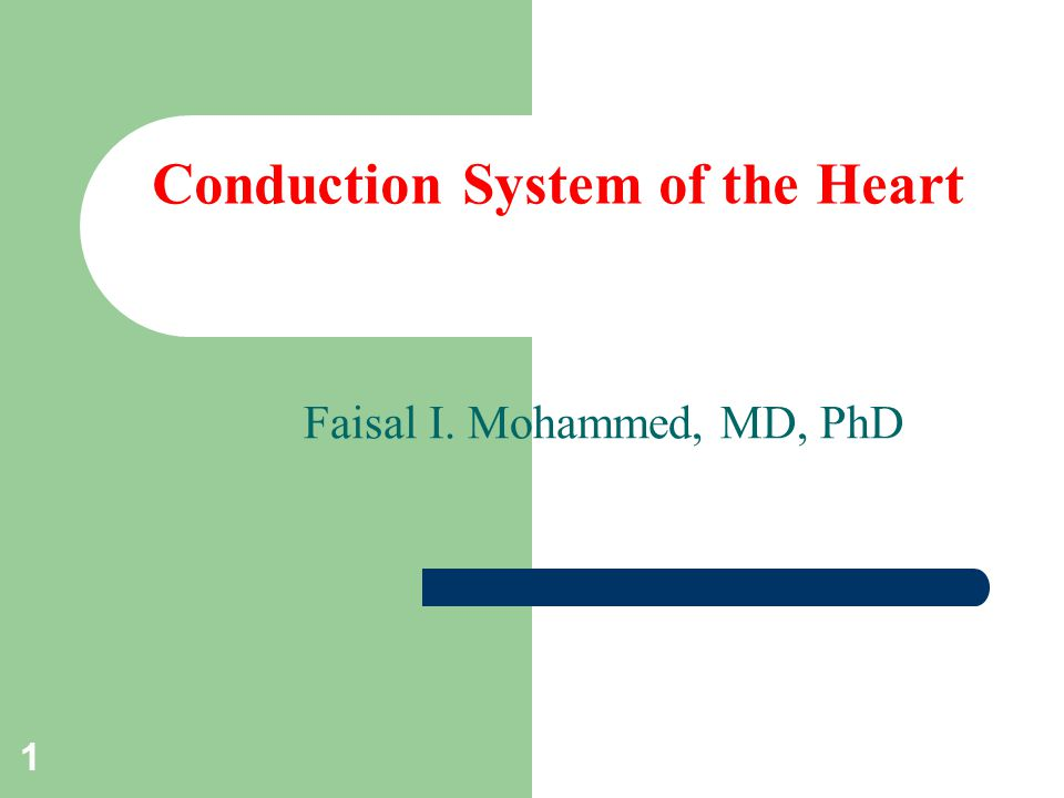 1 Conduction System of the Heart Faisal I. Mohammed, MD, PhD