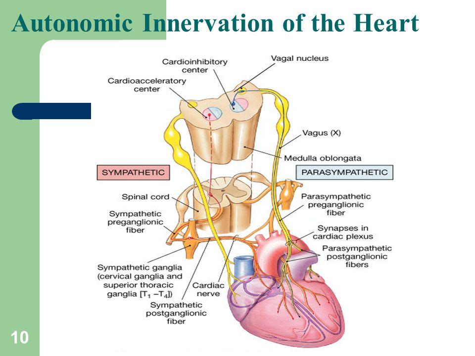 10 Autonomic Innervation of the Heart