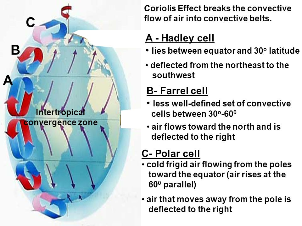 Coriolis Effect breaks the convective flow of air into convective belts. A B C A - Hadley cell lies between equator and 30 o latitude deflected from t