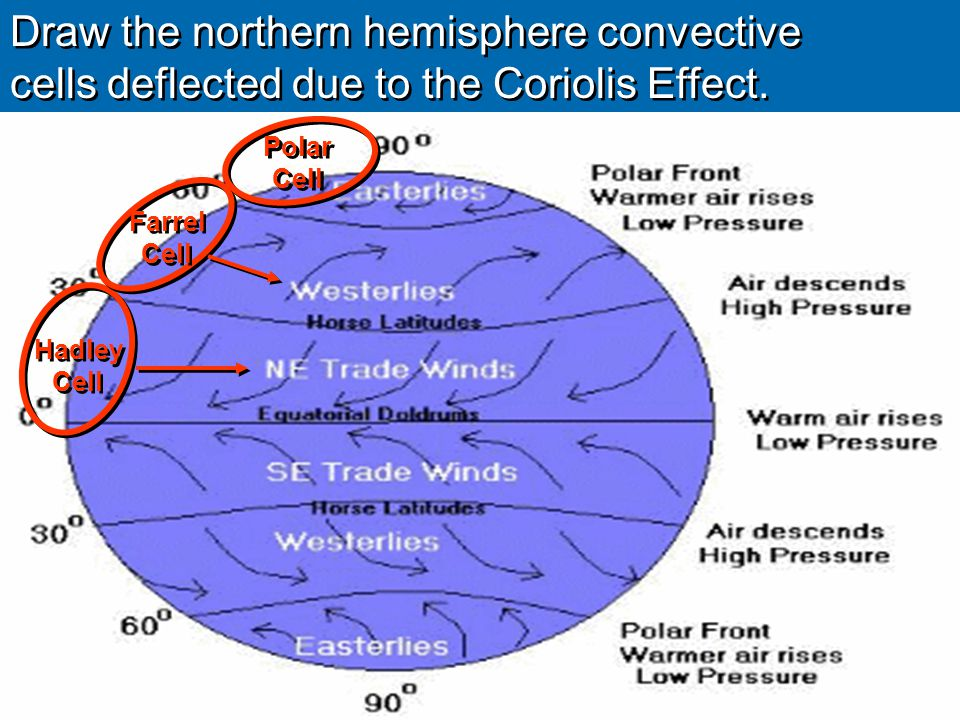 Draw the northern hemisphere convective cells deflected due to the Coriolis Effect. Draw the northern hemisphere convective cells deflected due to the