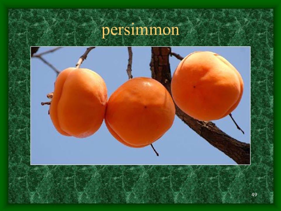 49 persimmon
