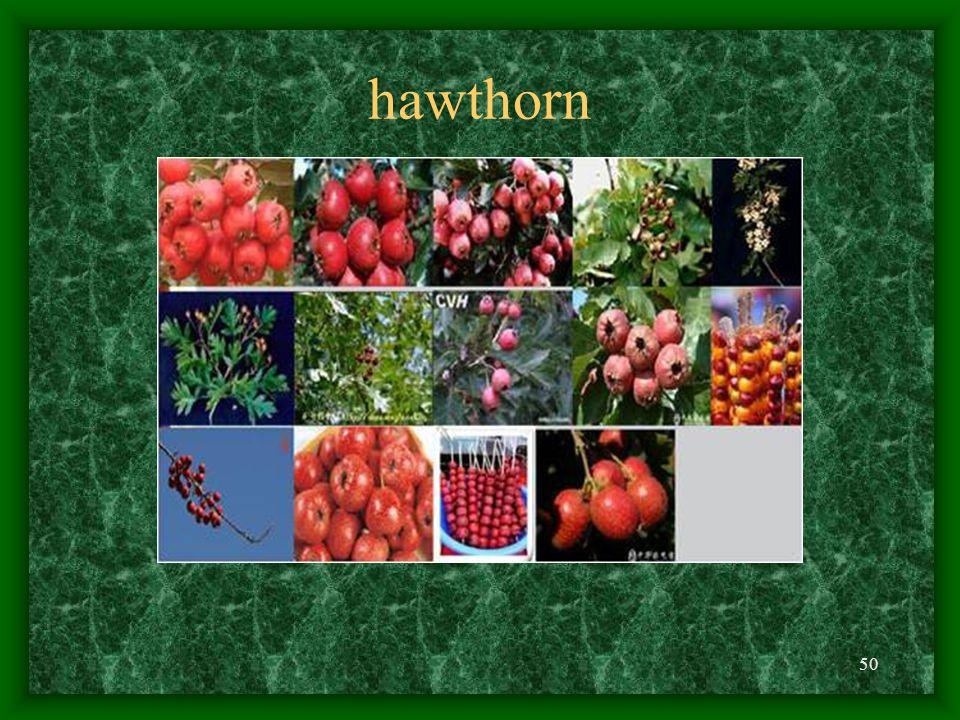 50 hawthorn