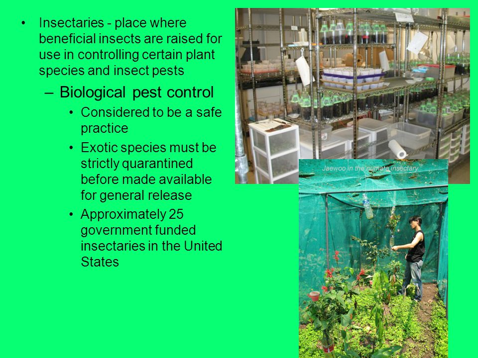 Insectaries - place where beneficial insects are raised for use in controlling certain plant species and insect pests –Biological pest control Considered to be a safe practice Exotic species must be strictly quarantined before made available for general release Approximately 25 government funded insectaries in the United States