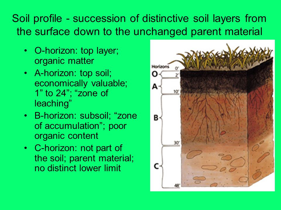 Soil profile - succession of distinctive soil layers from the surface down to the unchanged parent material O-horizon: top layer; organic matter A-horizon: top soil; economically valuable; 1 to 24 ; zone of leaching B-horizon: subsoil; zone of accumulation ; poor organic content C-horizon: not part of the soil; parent material; no distinct lower limit