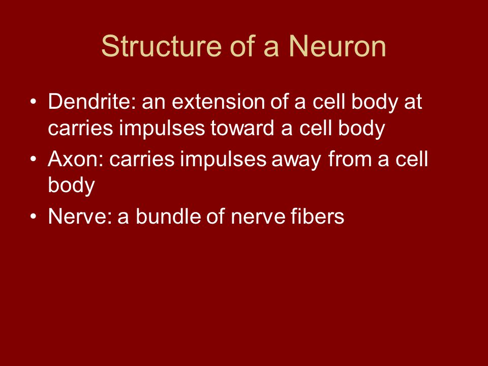 Structure of a Neuron 1. Dendrites 2. Nucleus 3. Cell Body 4. Axon 5. Axon Tips