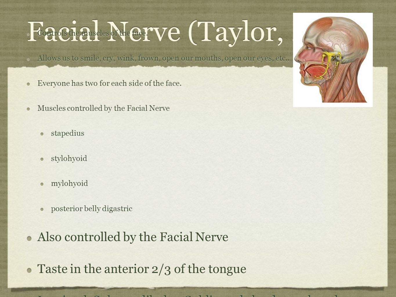 Facial Nerve (Taylor, 2012) Controls the muscles of the face. Allows us to smile, cry, wink, frown, open our mouths, open our eyes, etc.. Everyone has