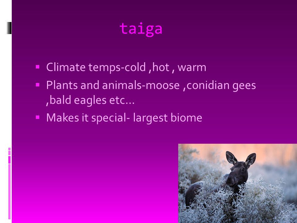 taiga  Climate temps-cold,hot, warm  Plants and animals-moose,conidian gees,bald eagles etc…  Makes it special- largest biome