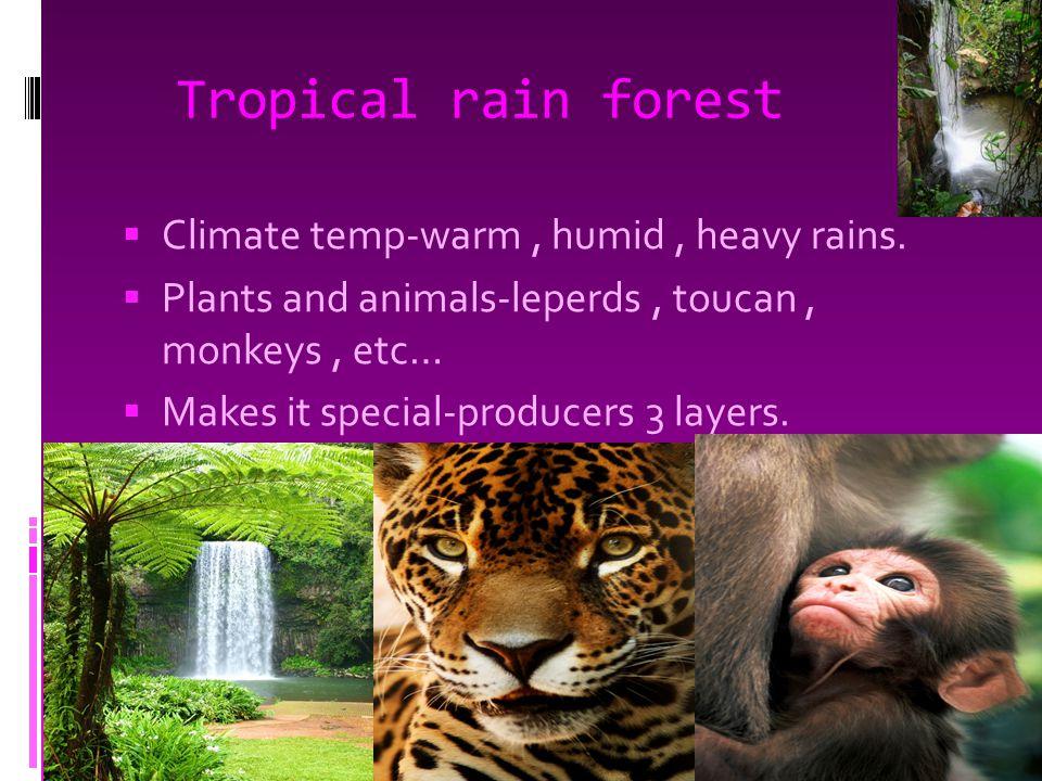 Tropical rain forest  Climate temp-warm, humid, heavy rains.