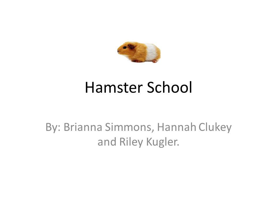 Hamster School By: Brianna Simmons, Hannah Clukey and Riley Kugler.