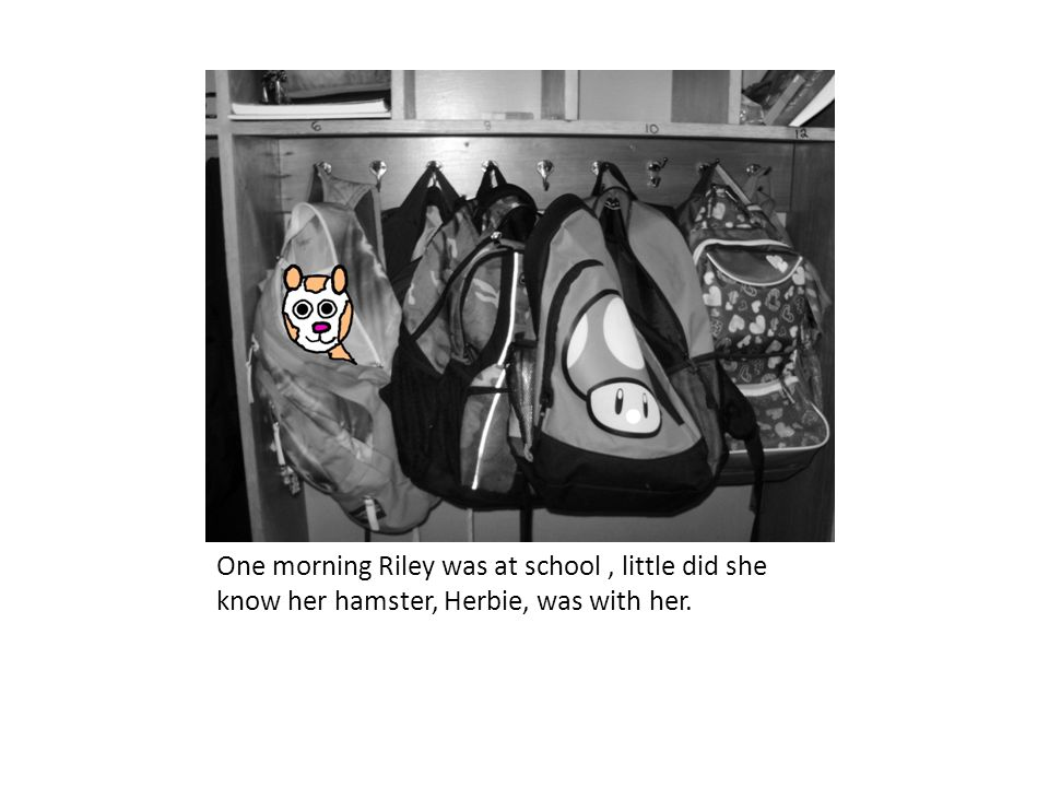 One morning Riley was at school, little did she know her hamster, Herbie, was with her.