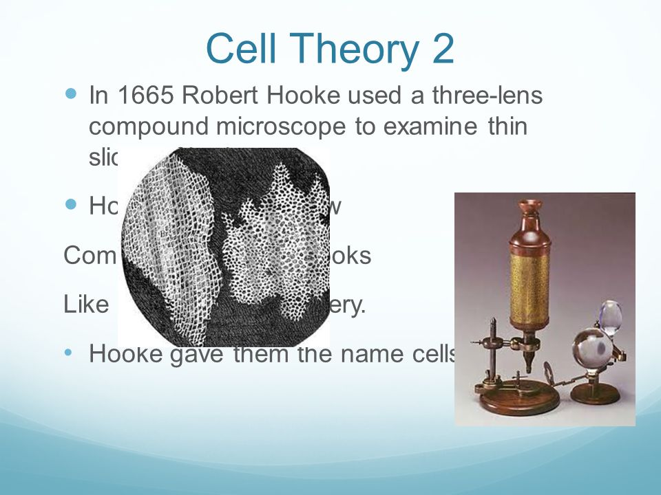 Cell Theory 2 In 1665 Robert Hooke used a three-lens compound microscope to examine thin slices of bark.