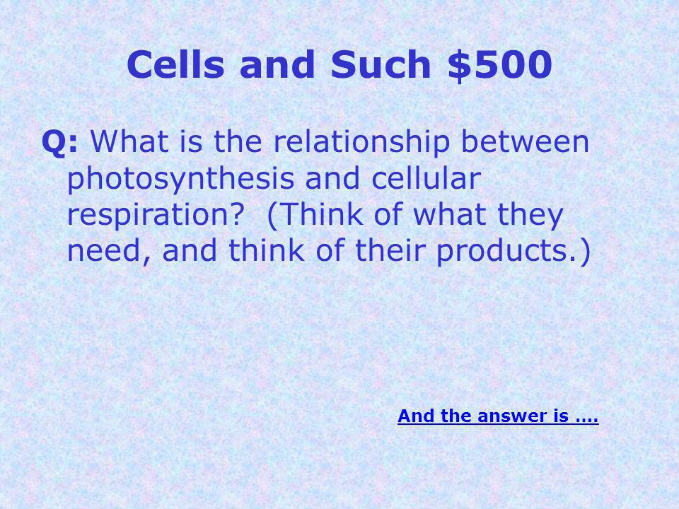 Cells and Such $500 Q: What is the relationship between photosynthesis and cellular respiration.