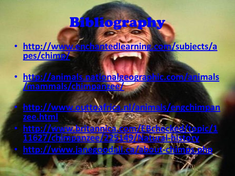 Bibliography http://www.enchantedlearning.com/subjects/a pes/chimp/ http://www.enchantedlearning.com/subjects/a pes/chimp/ http://animals.nationalgeographic.com/animals /mammals/chimpanzee/ http://animals.nationalgeographic.com/animals /mammals/chimpanzee/ http://www.outtoafrica.nl/animals/engchimpan zee.html http://www.outtoafrica.nl/animals/engchimpan zee.html http://www.britannica.com/EBchecked/topic/1 11627/chimpanzee/225149/Natural-history http://www.britannica.com/EBchecked/topic/1 11627/chimpanzee/225149/Natural-history http://www.janegoodall.ca/about-chimps.php