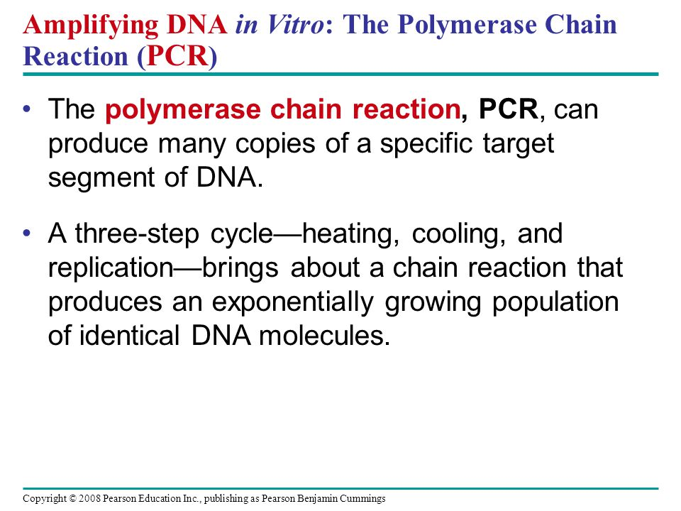 Copyright © 2008 Pearson Education Inc., publishing as Pearson Benjamin Cummings Amplifying DNA in Vitro: The Polymerase Chain Reaction ( PCR ) The po
