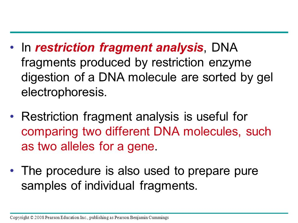 Copyright © 2008 Pearson Education Inc., publishing as Pearson Benjamin Cummings In restriction fragment analysis, DNA fragments produced by restricti