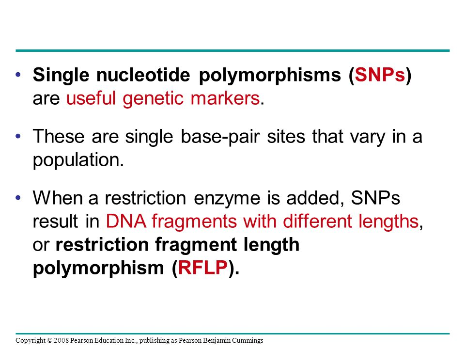 Copyright © 2008 Pearson Education Inc., publishing as Pearson Benjamin Cummings Single nucleotide polymorphisms (SNPs) are useful genetic markers. Th