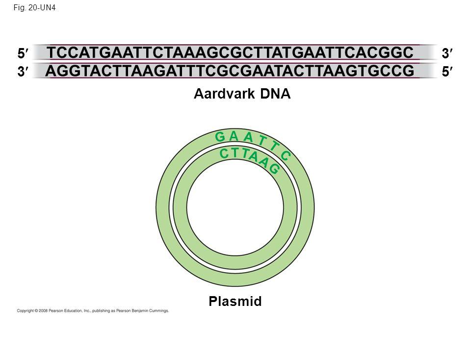 Fig. 20-UN4 G Aardvark DNA Plasmid 5 3 3 TCCATGAATTCTAAAGCGCTTATGAATTCACGGC 5 AGGTACTTAAGATTTCGCGAATACTTAAGTGCCG A C T T A A A G T T C