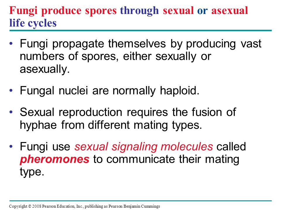 Copyright © 2008 Pearson Education, Inc., publishing as Pearson Benjamin Cummings Fungi produce spores through sexual or asexual life cycles Fungi pro