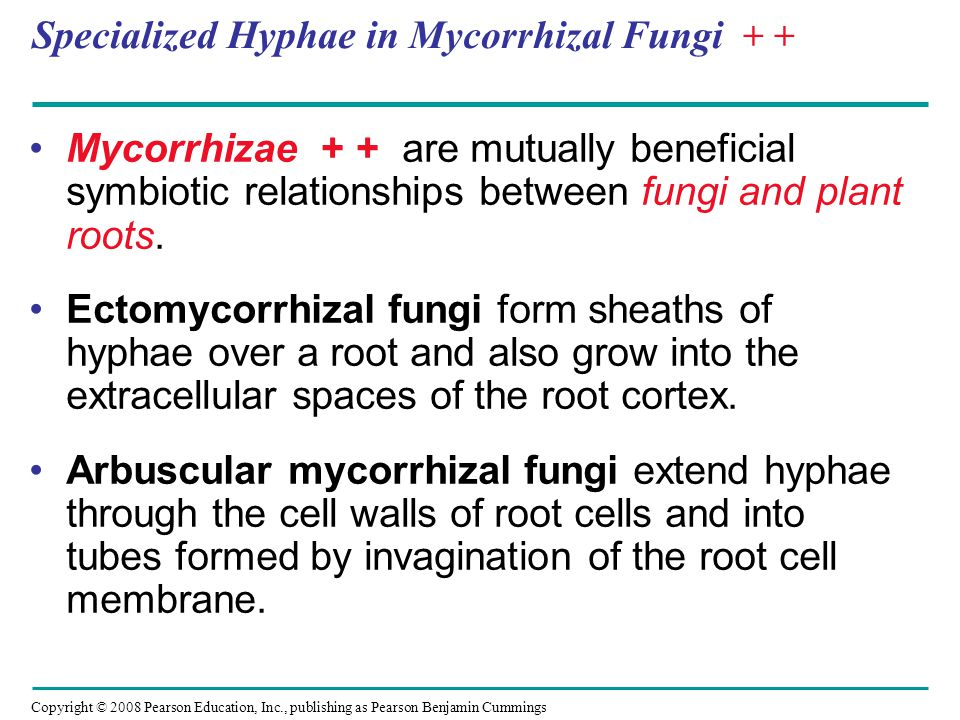 Copyright © 2008 Pearson Education, Inc., publishing as Pearson Benjamin Cummings Fungi as Pathogens + - About 30% of known fungal species are parasites or pathogens, mostly on or in plants.