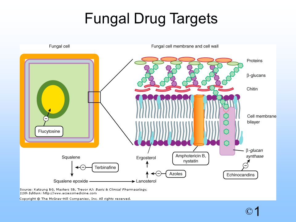 1 © Fungal Drug Targets
