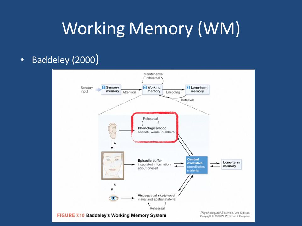 Working Memory (WM) Baddeley (2000 )
